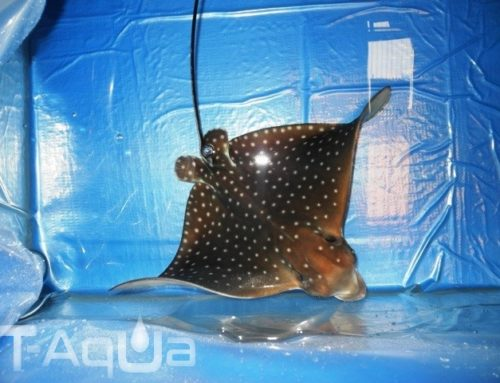Fauna morska